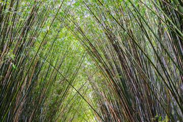 Door stickers Palm tree Plantação de bambu, amplamente utilizada na construção e culinária, por muitos da cultura chinesa
