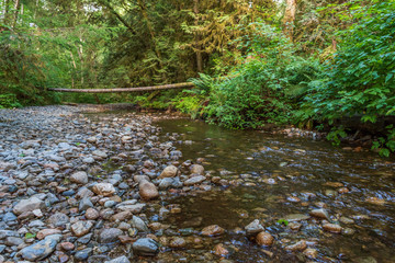Wall Mural - Small mountain creek in Vancouver, Canada. Long exposure water flow.