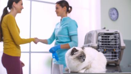 Beautiful cat at the vet clinic