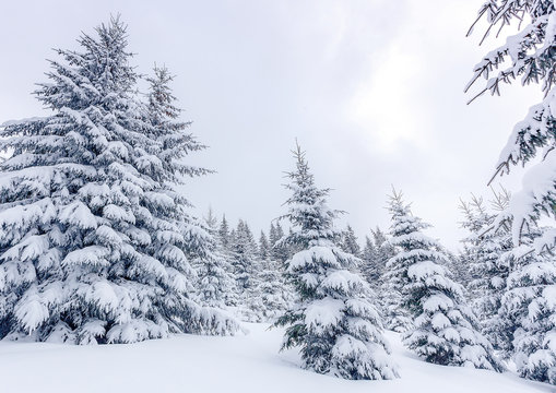 Amazing winter background. Beautiful winter landscape with snow-cowered trees. Awesome frosty forest. Wonderful Christmas Scene.  Design new year celebration. Winter holiday concept. Postcard.