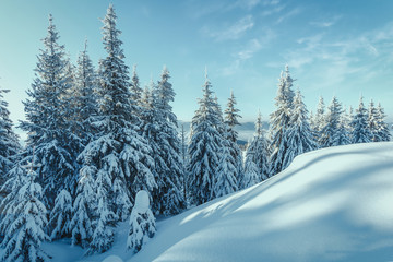 Wonderful Wintry Landscape at mountains. Frosty morning with Perfect Blue sky. Amazing Alpine Highlands in winter. Impressive picture of wild area. Awesome nature background. Winter holiday concept.