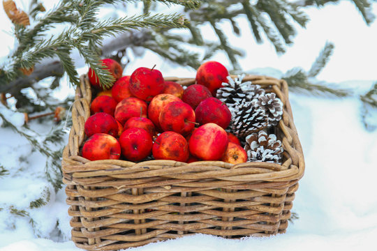Christmas composition with red apples in basket and branch of snow-covered christmas tree