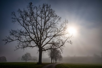 November Nebel Fototapete