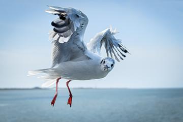 Foto auf Leinwand Nordsee flyby