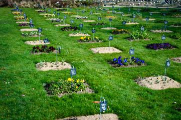 Photo sur Toile Vert Jardin des plantes de Nantes, France