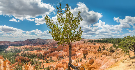 Panoramic view from Bryce Point over the Amphitheater in the Bryce Canyon, Utah