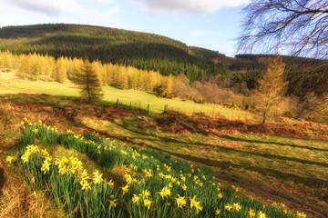 Powerscourt meadows with bloom flowers bed  -Wicklow, Dublin, Enniskerry, Ireland