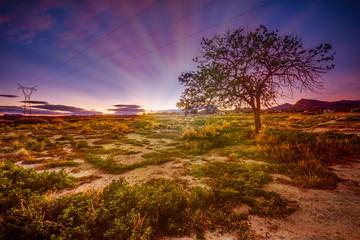 Krajobraz o Zachodzie Słońca Hiszpania Drzewko Szczęścia
