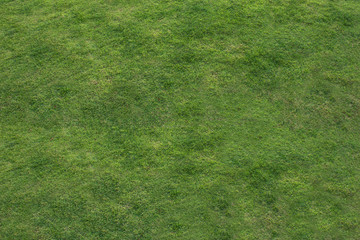 The abstract background of green grass flooring is the background for inserting images and text.