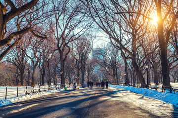 Wall Mural - The mall in central park at sunny winter day, New York City, USA