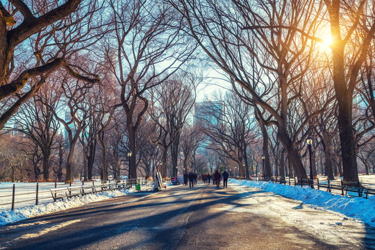 The mall in central park at sunny winter day, New York City, USA