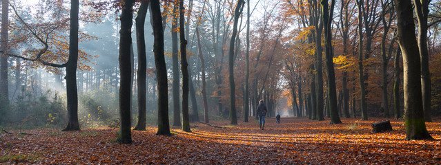 mother and child walk in autumnal forest near zeist in the netherlands
