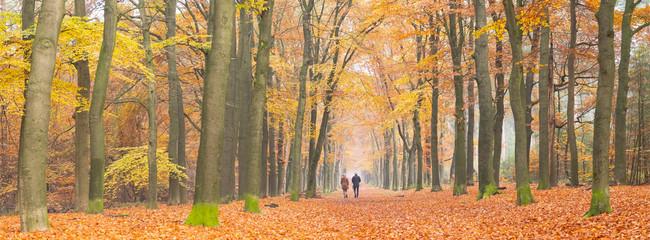 couple walks in autumnal forest near zeist in holland