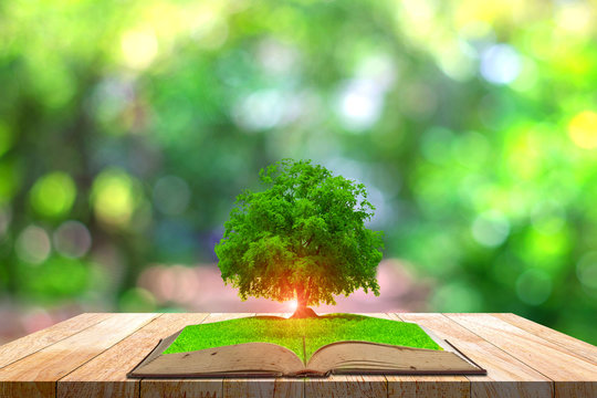 Knowledge concept image with green tree growing from book on bokeh background,magic book.