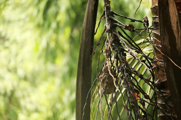 Coconut Tree Bark Shedding Leaves
