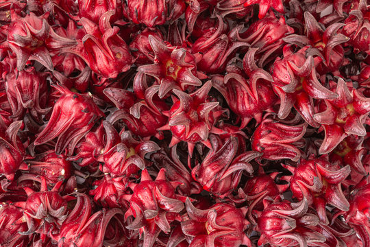Red roselle, for background and texture. Pile to make the healthy beverage. Selective focus.