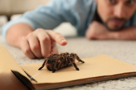 Man and tarantula on carpet, closeup. Arachnophobia (fear of spiders)