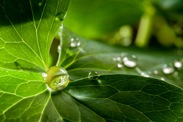 dew water drops on green grass leaf close up