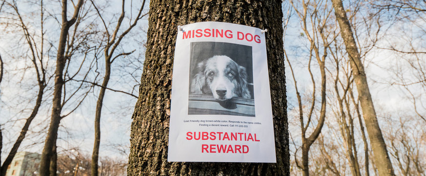 Flyer with information about the missing dog hangs on a tree in the park