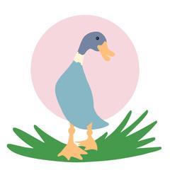 Duck goes forward, drake walks through the grass. Animal print. Vector illustration