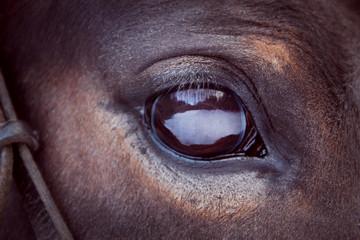 brown horse eye close-up with big eyelashes and sad smart look