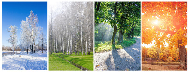 Collage seasons . All season. Seasons in one photo. Winter spring summer autumn. Tree branch. Grass with dew. Nature. Nicely Fotomurales