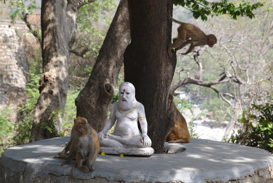 NB__5504 Outdoor yogi statue and group of monkeys
