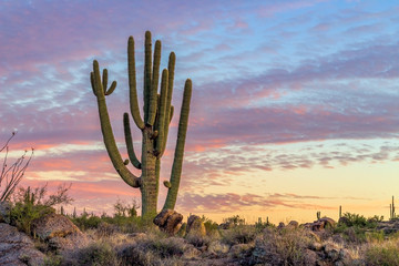 Poster Cactus Big Cactus with Vibrant Sunset Clouds & Skies I