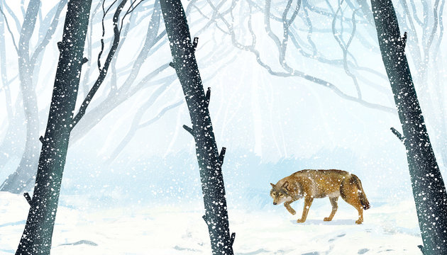 Winter forest with wolf. Illustration painting.