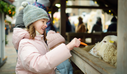 Two cute young sisters having fun feeding sheep in a small petting zoo on traditional Christmas...