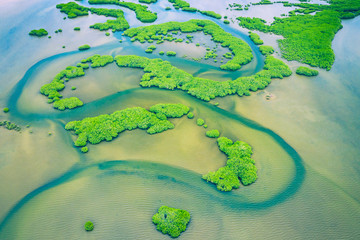 Foto op Canvas Olijf Senegal Mangroves. Aerial view of mangrove forest in the Saloum Delta National Park, Joal Fadiout, Senegal. Photo made by drone from above. Africa Natural Landscape.
