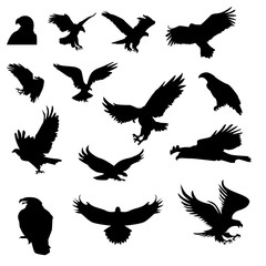 Hunting eagle detailed hunting vector silhouettes set isolated on white background