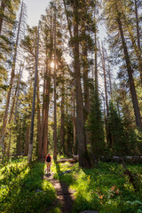 Woman walking through conifer forest on the Lukens Lake Trail in Yosemite National Park, California.