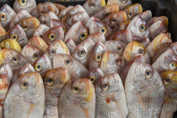 Fish in a row at the market
