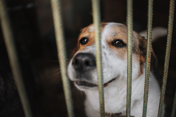 sad mixed breed dog posing in a cage in animal shelter