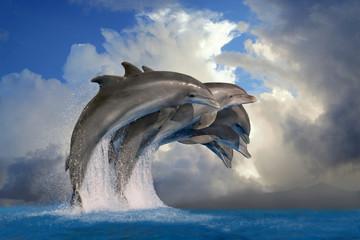 Photo sur Aluminium Dauphin Große Tümmler (Tursiops truncatus) Gruppe springt aus Wasser