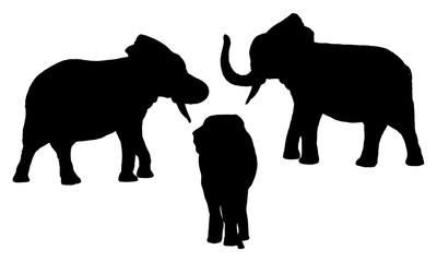 Asian elephant silhouettes set on white background