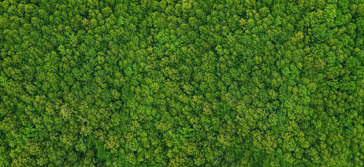 Garden Poster Green forest view from above