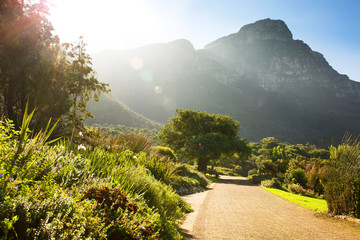 Sunset over walking path with tree in Kirstenbosch Botanical Garden, Cape Town, South Africa