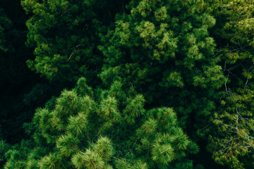 Drone aerial in green forest. Birds eye view