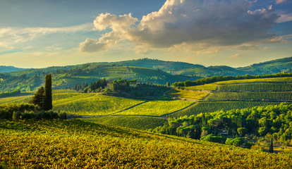 Tuinposter Florence Panzano in Chianti vineyard and panorama at sunset. Tuscany, Italy