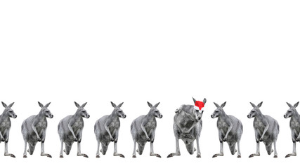 Male kangaroos in Christmas hats isolated on white background. Copy space.
