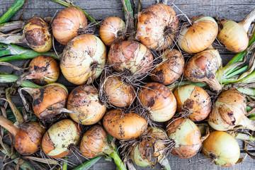 bulbs from garden on wooden table. Harvest fresh vegetables for vegetarians