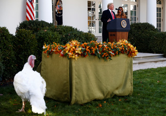 U.S. President Trump hosts pardoning of the 72nd National Thanksgiving Turkey at the White House in Washington