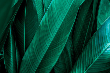 Fotomurales - green leaf texture, dark green foliage nature background, tropical leaf