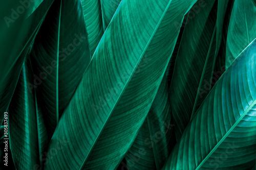 Wall mural green leaf texture, dark green foliage nature background, tropical leaf