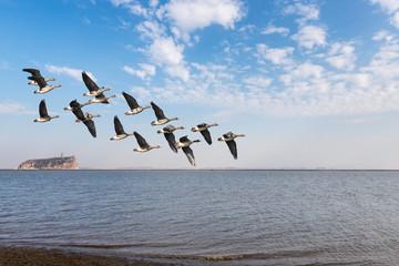 migratory birds on poyang lake