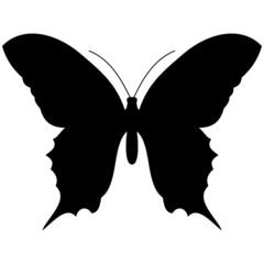 schattenbild eines Schmetterlings, isoliert freigestellt vor weißem Hintergrund