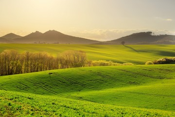 Spring ripples of autumn fields lined with trees under hills with castle, photo in green colors