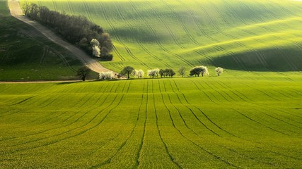 Tree alley in spring undulating fields of South Moravia with road on the background in evening light.
